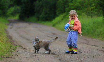 Offrir un petit chat à ses enfants : conseils avant de passer à l'action