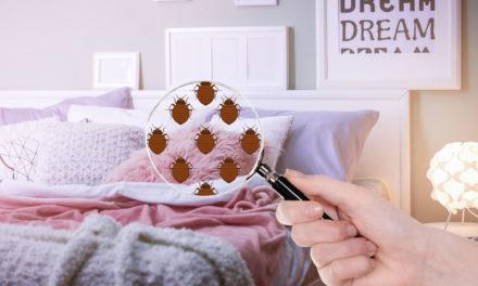 Parents : Punaises de lit ? comment les identifier et s'en débarrasser