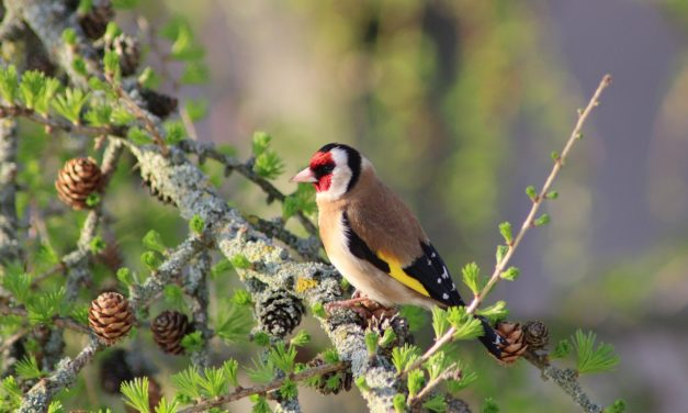 Comment observer les oiseaux du jardin avec ses enfants ?